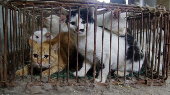 chats en cage
